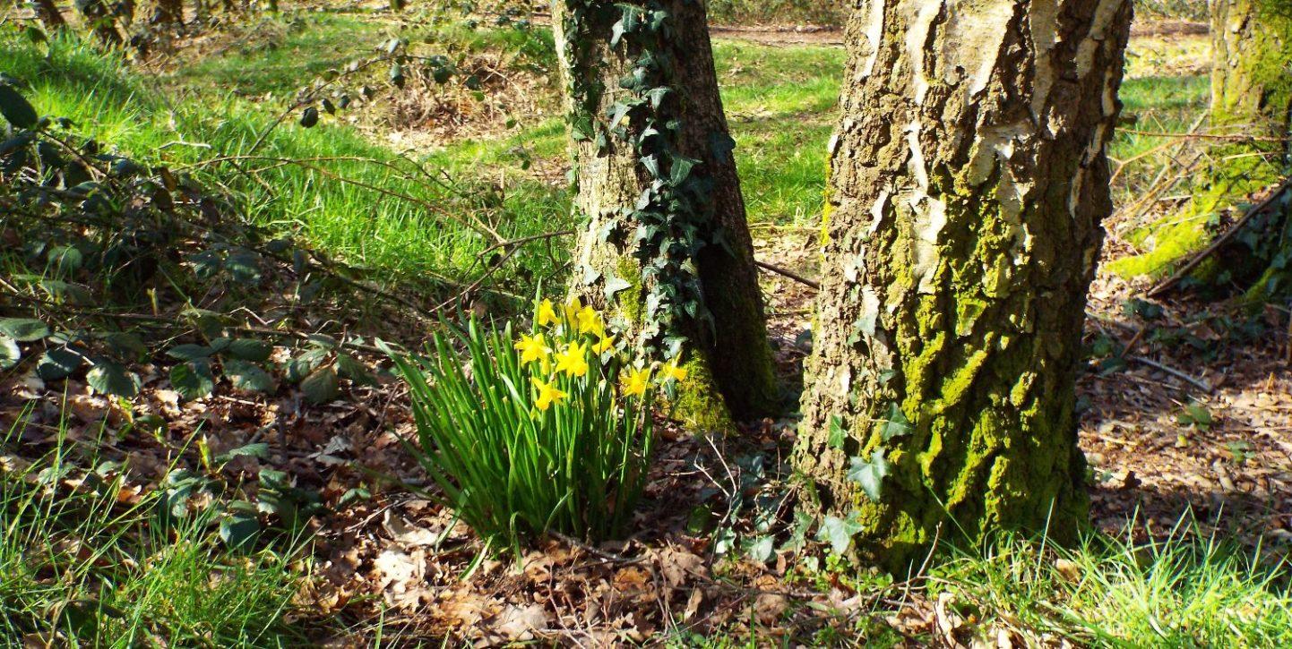 Galleywood Common