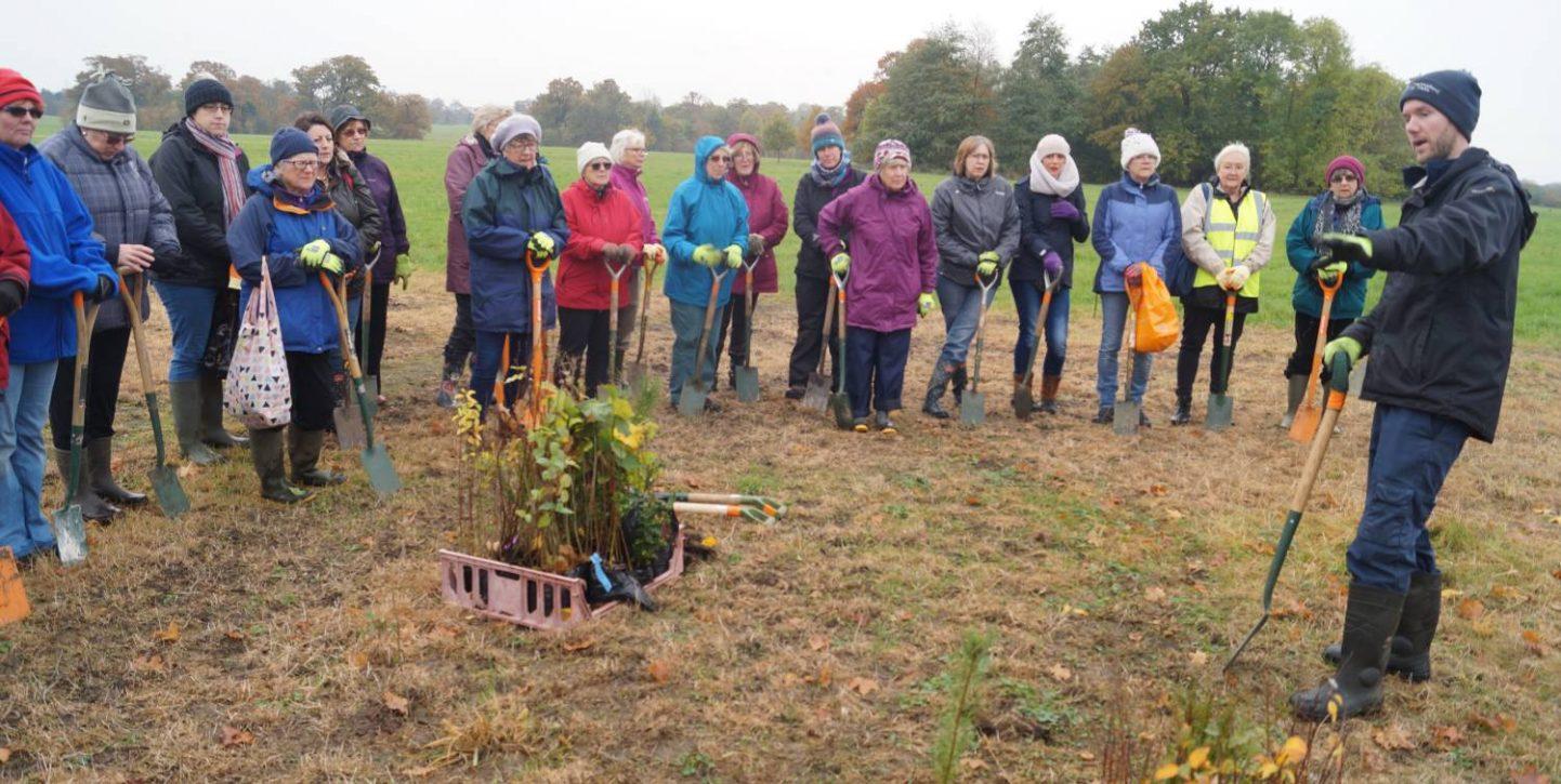 volunteer plant a tree