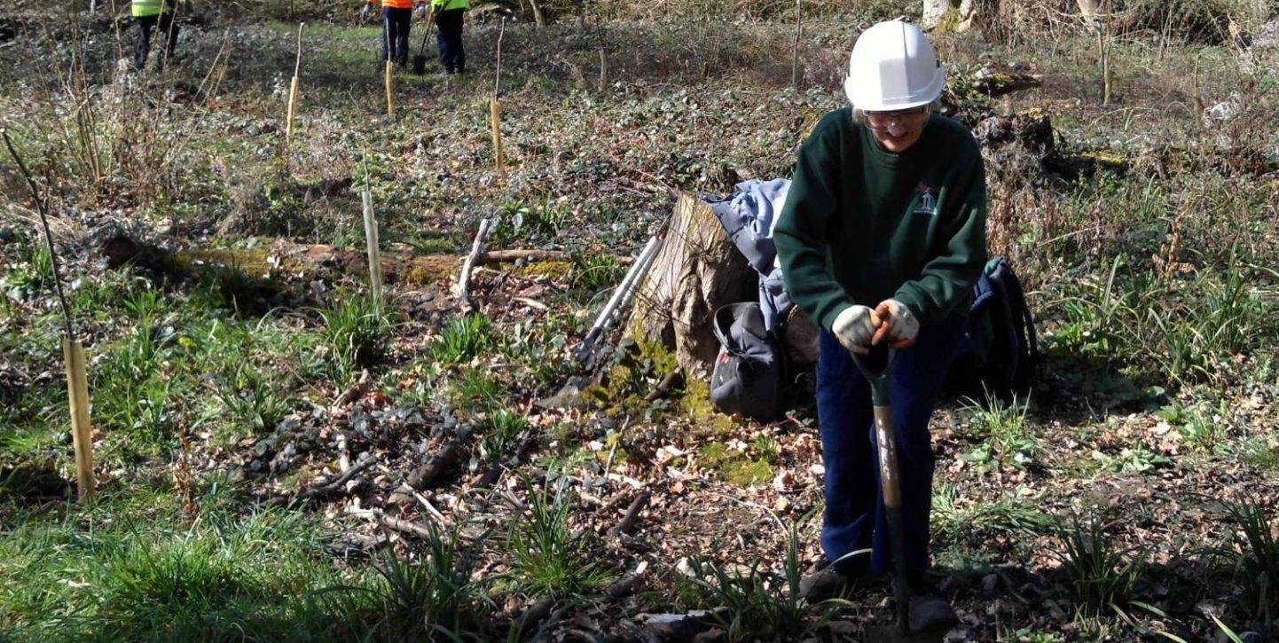 tree planting vols