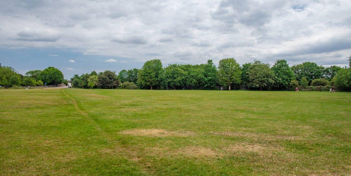 Springfield Green pollards Meadow