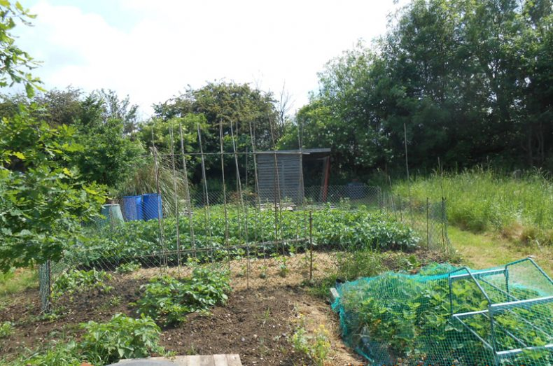 Chelmsford Allotments