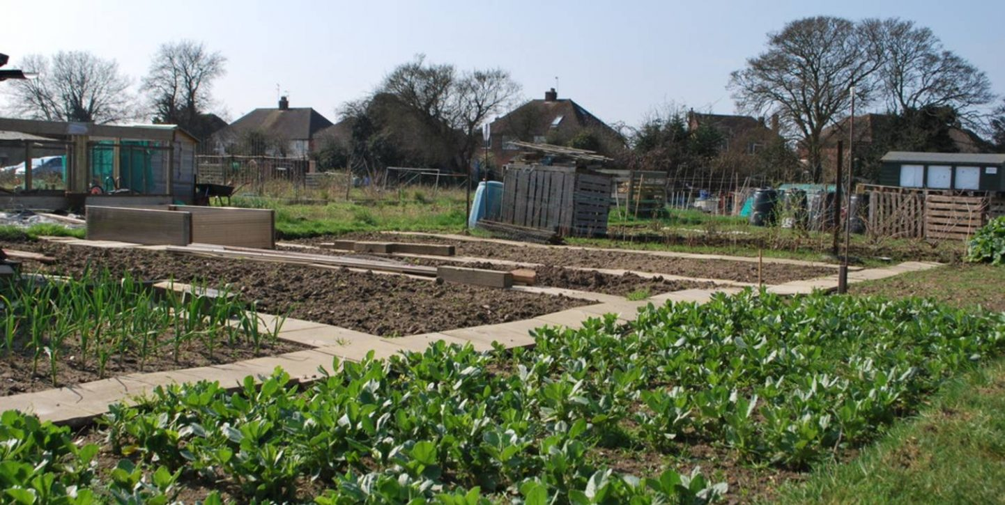 Allotment in Town