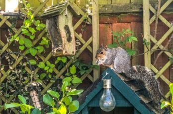 Bring Wildlife into the Garden