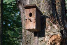Put up a bird box