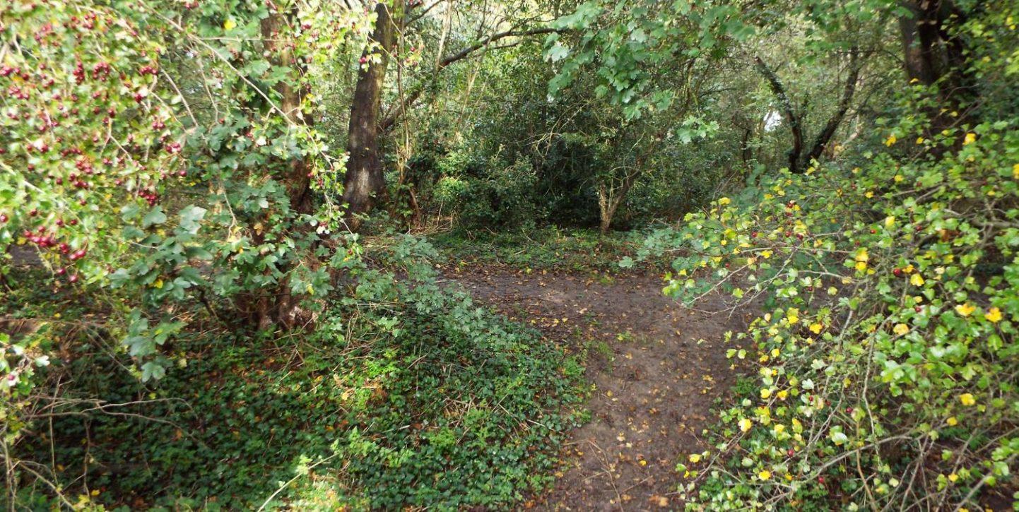 andrews park autumn