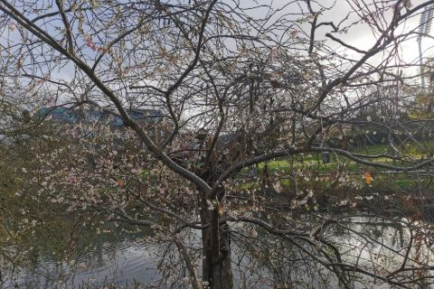 Central Park_diary