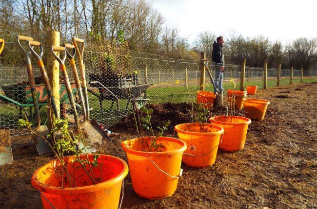 Tree Planting 2020/21