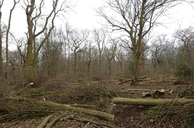 Hylands Woodland Management