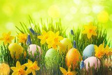 Spring Quiz