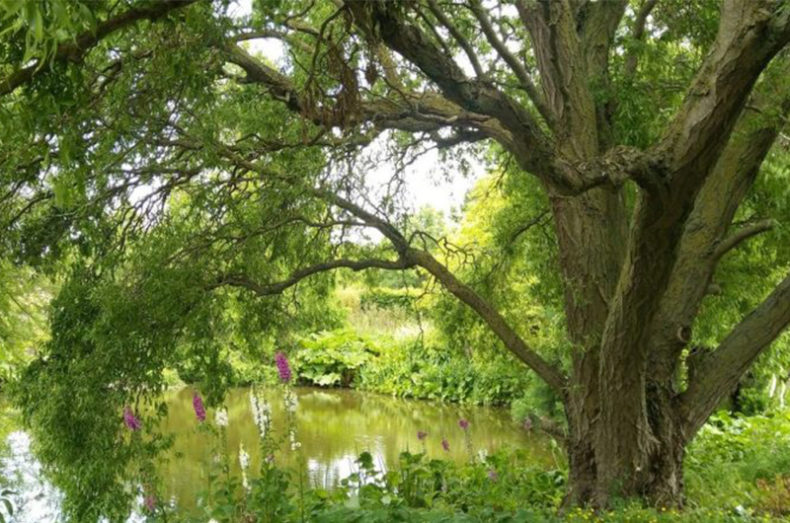 Greener Chelmsford Grant